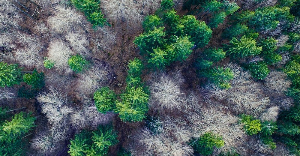 forest aerial shot drone