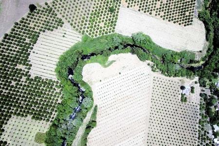 Plant emergence & population